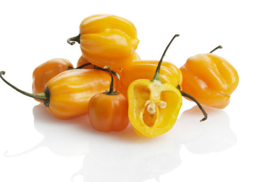 how to grow habanero peppers from seeds